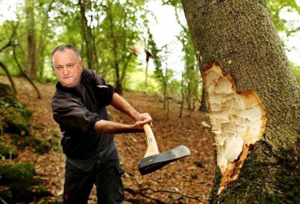 Valeriu Munteanu: Dodon tăietorul de lemne. Multă lume va îngheța la iarnă